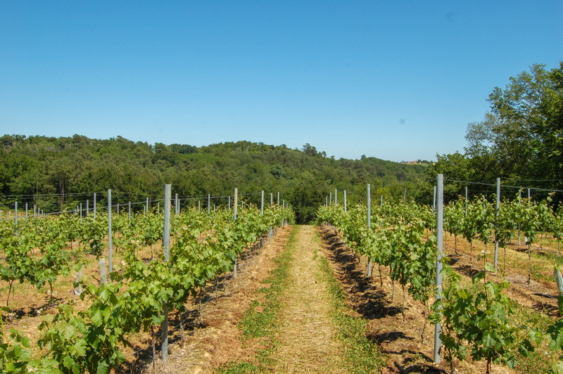 French property for sale in ARBIS, Gironde - €1,575,000 - photo 2