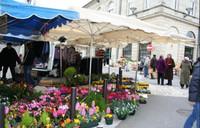 latest addition in Miramont-de-Guyenne Lot-et-Garonne