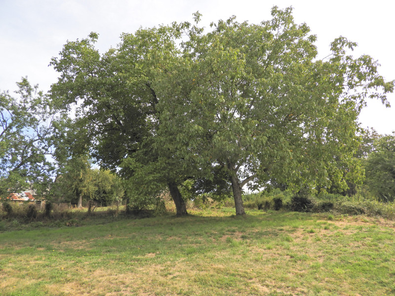 French property for sale in Uzerche, Corrèze - €77,000 - photo 6