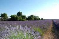 French property, houses and homes for sale in Saint-Jurs Alpes-de-Hautes-Provence Provence_Cote_d_Azur