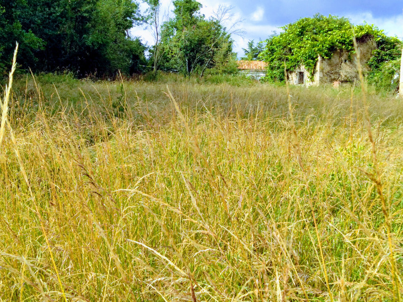 French property for sale in Le Chillou, Deux-Sèvres - €29,000 - photo 4