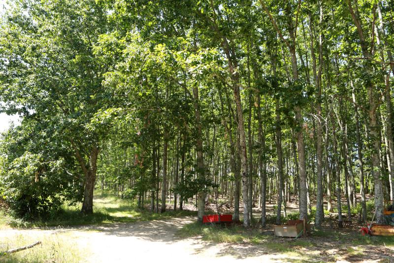 French property for sale in Mareuil en Périgord, Dordogne - €399,000 - photo 5