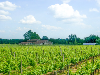 This beautiful château transformed into a well run and profitable wine business - 20 ha of AOC Bordeaux
