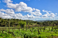 French property, houses and homes for sale inMinerveHérault Languedoc_Roussillon