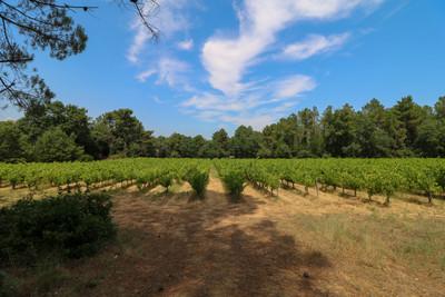 Opportunité unique pour une propriété récemment rénovée avec un «vignoble de loisirs» biologique et un terrain