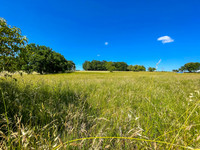 French property, houses and homes for sale in Carlux Dordogne Aquitaine