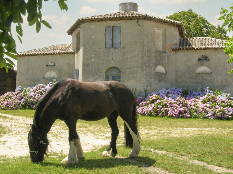 French property for sale in Saint-Martin-de-Coux, Charente-Maritime - €1,260,000 - photo 3