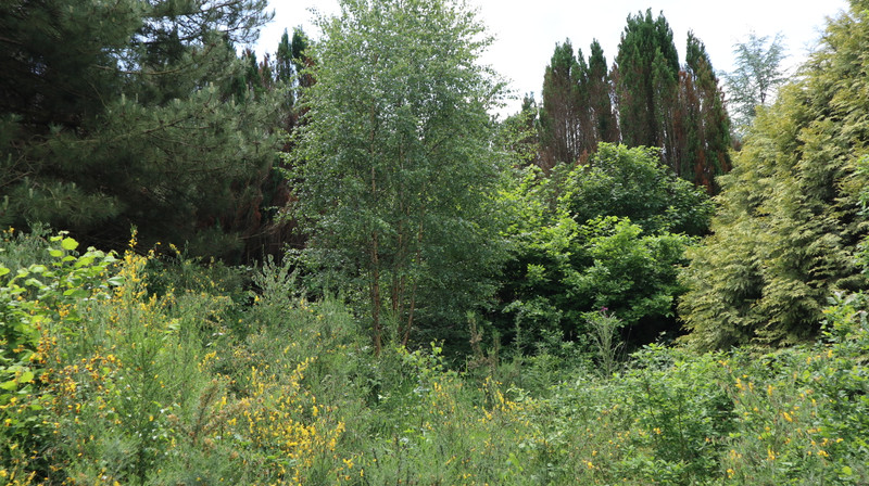 French property for sale in Melrand, Morbihan - €26,600 - photo 5