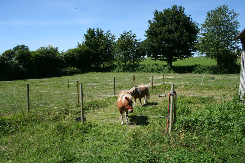 French property for sale in Husson, Manche - €141,700 - photo 6