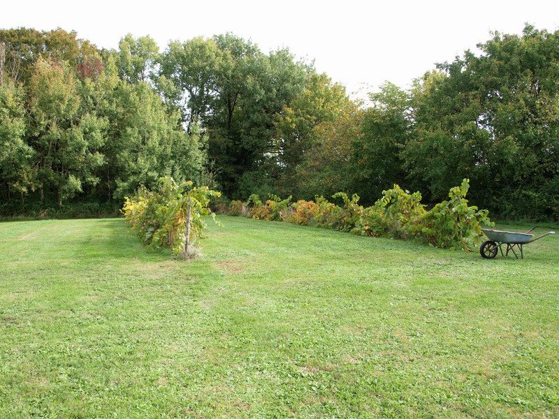 French property for sale in Mairé-Levescault, Deux Sevres - €136,250 - photo 4